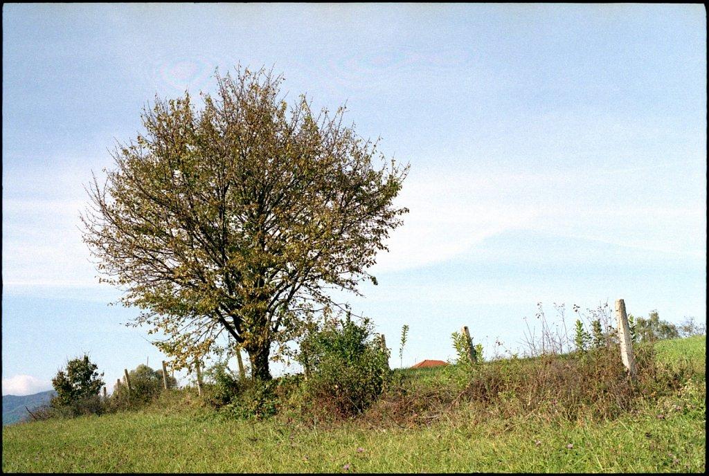 Scan-161216-0003-3.jpg